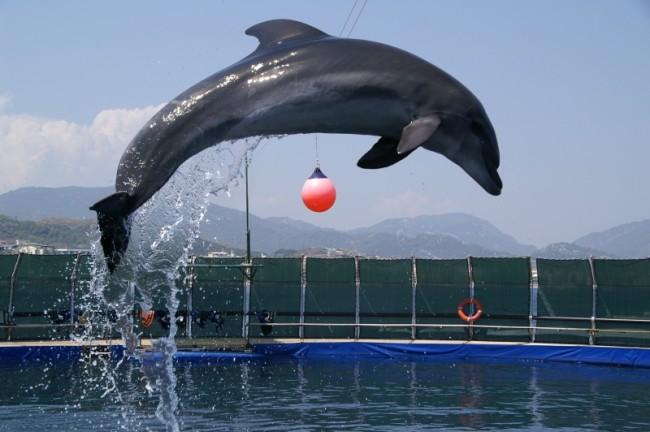 Marmarisi Delfinterápiás Központ csodálatos élményével