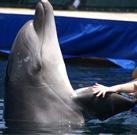"""Delfinterápia: """"Mindenkinek csak ajánlani tudom"""""""