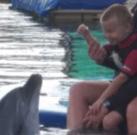 """Jánoska felejthetetlen találkozása a delfinekkel"""""""